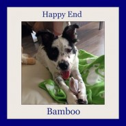 Happy End Bamboo