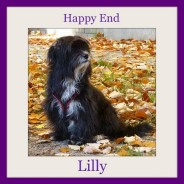 Happy Ending from Lilly