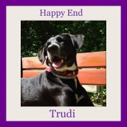 One year with Trudi