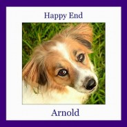 Happy End of Arnold