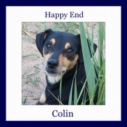 Happy End of Colin