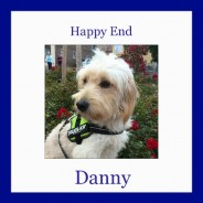 Happy Ending: One year with Danny