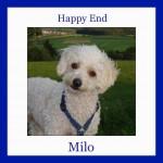 HE-Milo