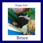 HE-Bruce