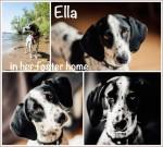 Ella2inFH